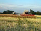Getreideernte